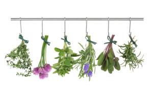 heilpflanzen-iStock_000014763204Small (2)
