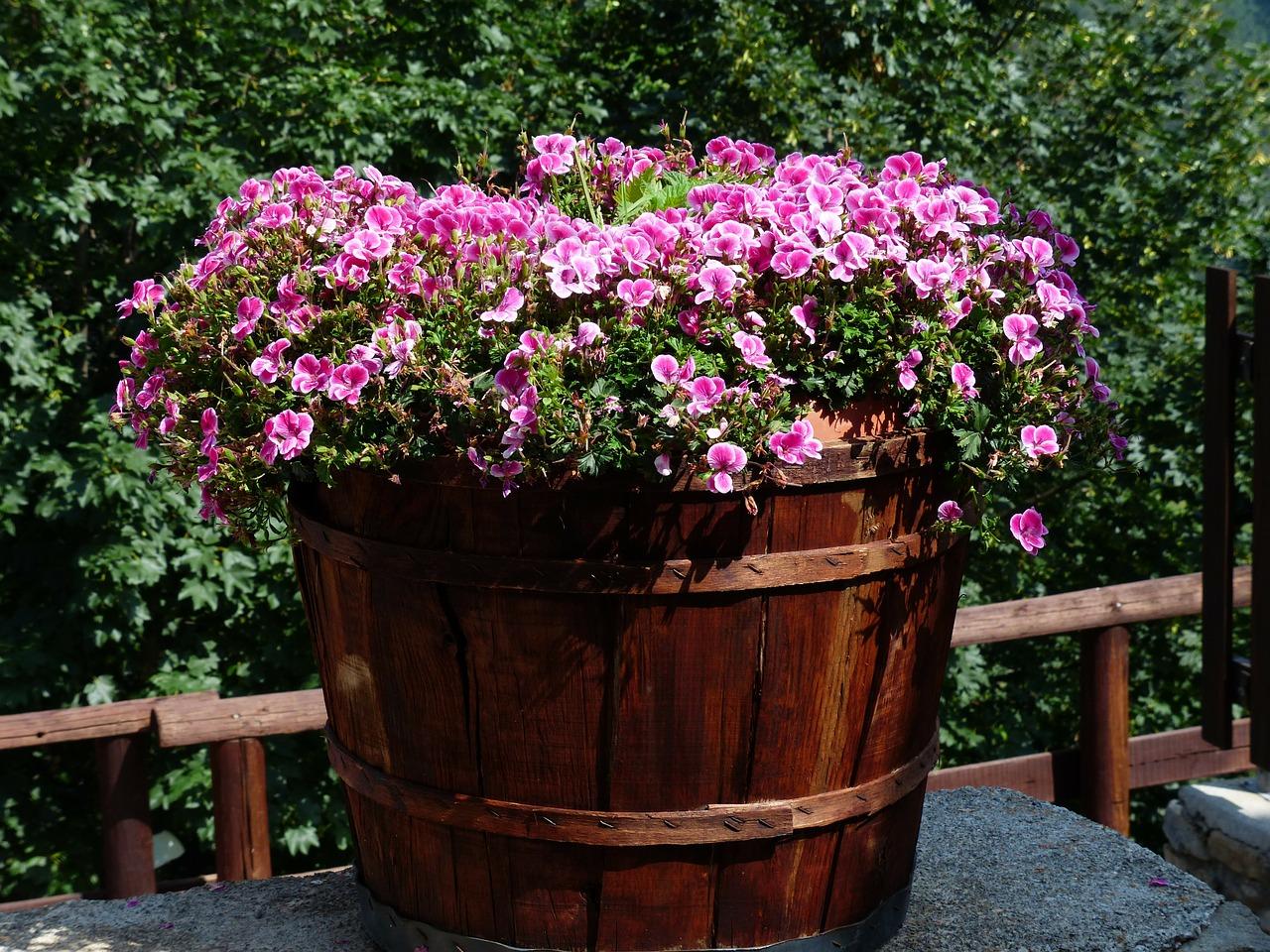 flowers-177389_1280